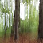 Woodland Abstract #5 by Dale Rockell