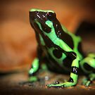 Green And Black Poison Dart Frog by Robbie Labanowski