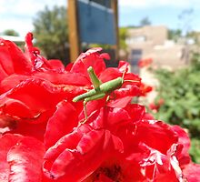 Flower and Insect Close-Up, Santa Fe, New Mexico by lenspiro