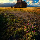 Mormon Row Barn and Thistles by KellyHeaton