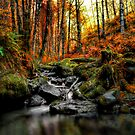 My Little Place ~ Fall Colors ~ by Charles & Patricia   Harkins ~ Picture Oregon
