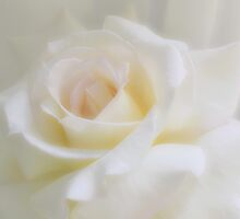 White Roses by Halobrianna