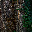Tree by Jeannie Peters