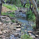 Creek and bush by sharon wingard