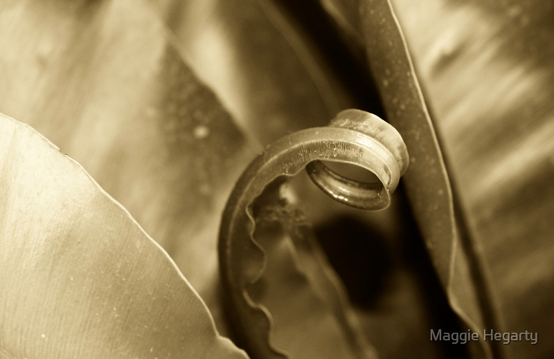Bronze Leaves by Maggie Hegarty