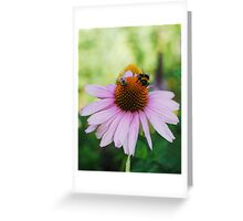 Echinacea Purpurea with Bees 2 Greeting Card