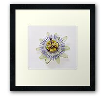 Isolated Bluecrown Passiflora Framed Print