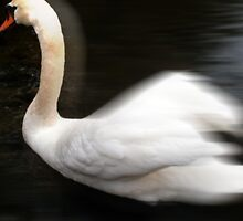 swan 8 by arteology