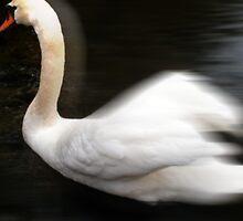 swan 8 by arteology