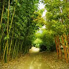 Down the Bamboo Path by debidabble