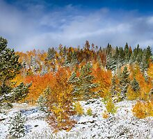 Rocky Mountain Autumn Storm by Bo Insogna