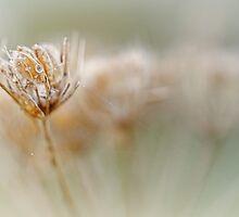Weed..... by Bob Daalder