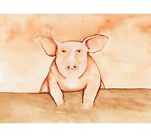 Pig in Watercolor Photographic Print