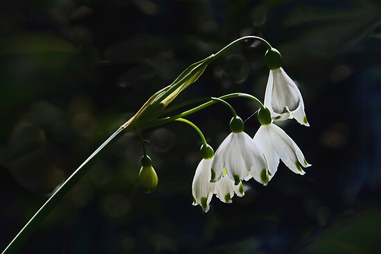 Summer Snowflake - May 2013 by cclaude