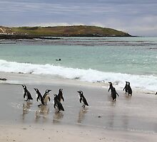 Magellanic Penguins on the Beach by Carole-Anne