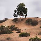 Tree On the Hill, Cloudy Day by heatherfriedman