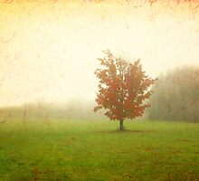 Maple Tree in Fog with Fall Colors  by BrookeRyanPhoto