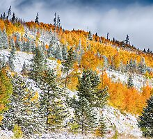 Colorado Rocky Mountain Snowy Autumn Colors by Bo Insogna