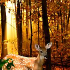 Bambi Storybook Photo by Randy & Kay Branham