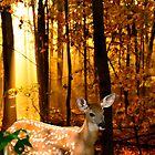 Bambi Storybook Photo by Randy & Kay Branham