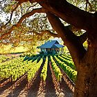 Napa Valley Homestead by Ellen Cotton