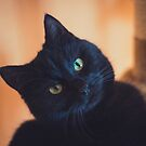 Black cat in cat tree by netza