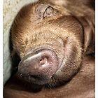 Iberian piglet by Wendy  Rauw