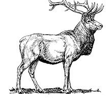 Elk Sketch by kwg2200