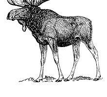 Moose Sketch by kwg2200