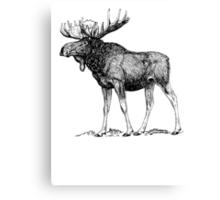 Moose Sketch Canvas Print