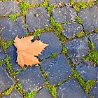 The autumn leaf by orsinico