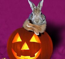 Halloween Party Bunny Rabbit by jkartlife