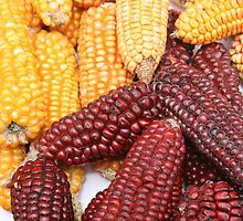 Multicolored Ears of Corn by rhamm