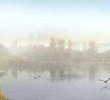 Morning Life by Igor Zenin