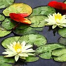 Water Lily Pond in Autumn by Susan Savad