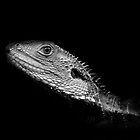 Lizard in Black and White by John Holding