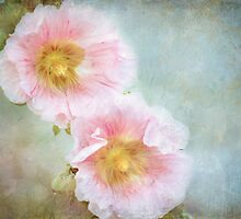 delicately pink by Teresa Pople