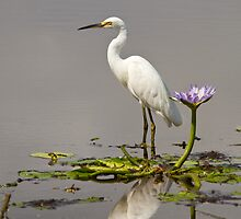 Amongst The Lilies by byronbackyard