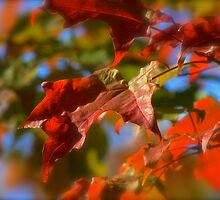 Turn over a new leaf by Sue Morgan