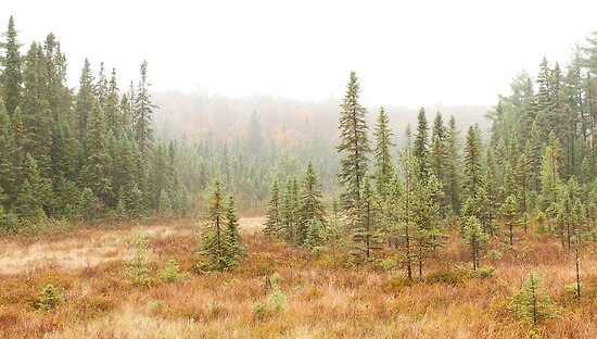 Fog in Algonquin by Jim Cumming