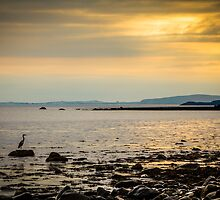Heron on the Beach at Sunset by Heidi Stewart