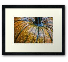 Pumpkin Pumpkin Framed Print