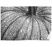 Pumpkin Pumpkin Black and White Poster