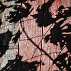 Shadows Against Old Red Barn Wood by Studio-one