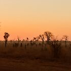 Kimberley Sunset by Pauline Tims