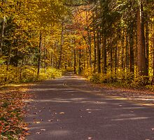 Country Road In Color by Thomas Young