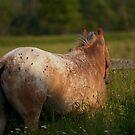 Appaloosa Horse by jamieleigh