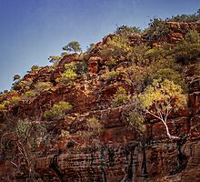 Murchison River Ghost Gum by Nicole Fenwick