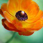 Orange on a Stem by The Photo  Nursery