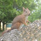 Hi There (Wild squirrel) by CreativeEm
